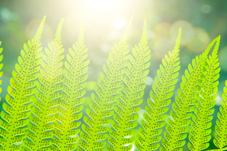 Sunlight through a male fern leaf showing sori on the underside against green vegetation, close up.