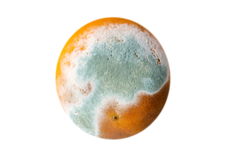 Orange in mold isolated on white