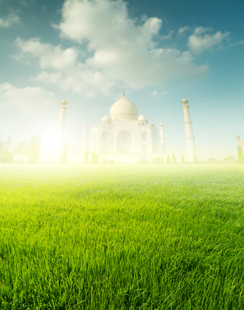 Paddy rice fields with Taj Mahal Stockfoto