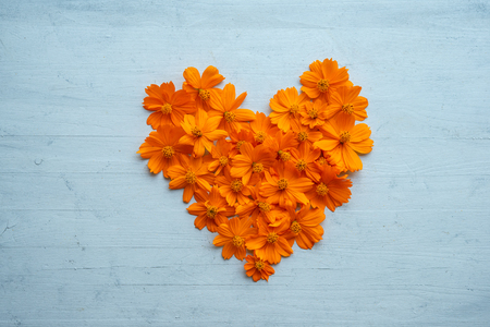 Orange cosmos flowers forming a heart shape on blue wooden Stockfoto