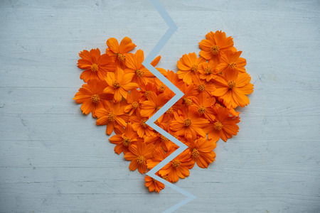 Broken heart made of orange cosmos flowers on blue wooden