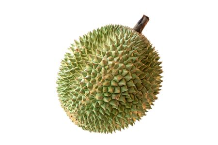 Malaysia famous king of fruits Blackthorn durian Black thorn isolated on white background. Imagens