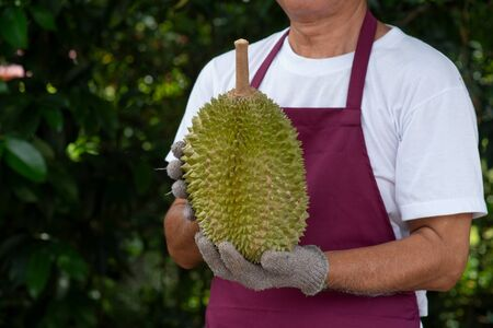 Farmer and musang king durian in orchard.