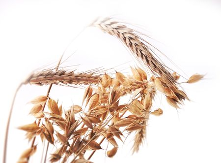 Beautiful golden ears of grain Stock Photo - 7729888