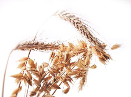 Beautiful golden ears of grain