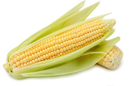 planta de maiz: Ma�z en la cob  Foto de archivo