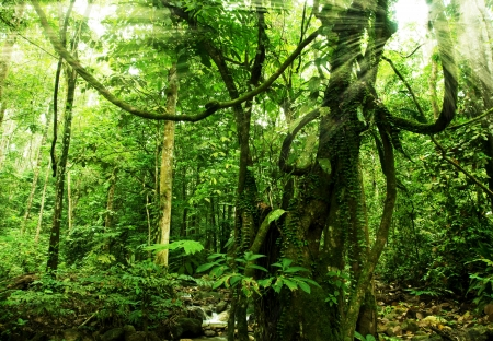 jungle background: rainforest with morning sunlight