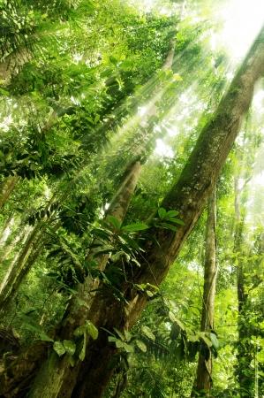 shining through: la mattina la luce del sole che splende attraverso la foresta tropicale