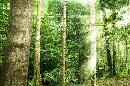 shining through: morning sunlight shining through tropical forest