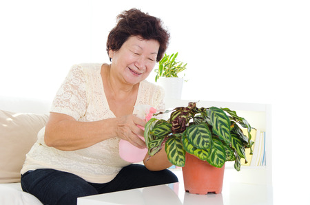 potted plant: Asian senior woman showering potted plant