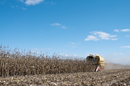 non cultivated: Yellow harvester works on corn field with blue sky