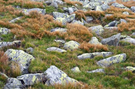 extreme terrain: Small rocks and grass details at high mountains Stock Photo
