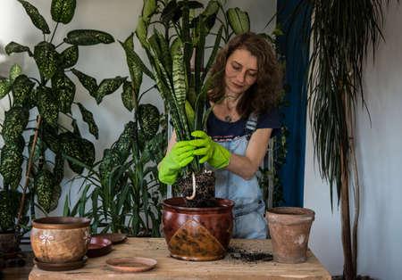 Woman planting houseplants indoors home gardening