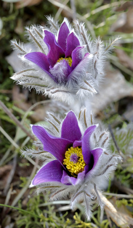 botanic: Beginning of springtime in the botanic garden of Soroksar Stock Photo
