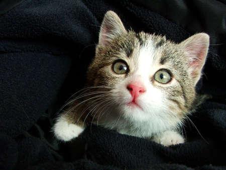 kitten watching the photographer Stock Photo - 600322
