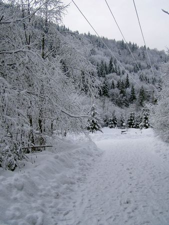 road through a winter forrest covered with snow Stock Photo