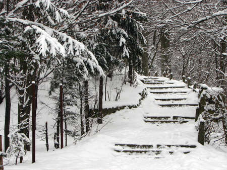 stairs in a pine forrest covered with snow Stock Photo