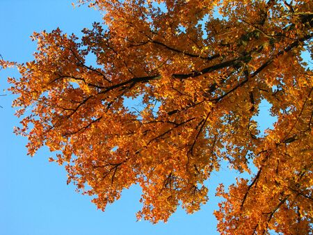 orange colored autumn tree