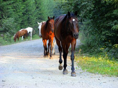 herd of horses strolling wild