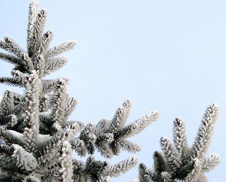 sub zero: pine tree in winter - seasonal greeting