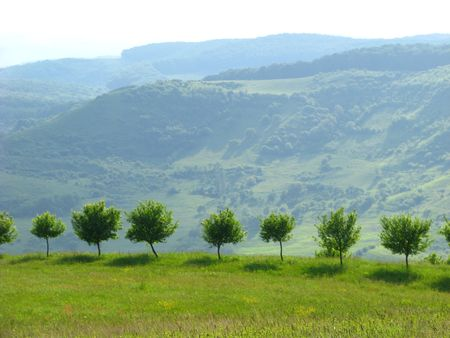 young trees on a hill concept of bio fruit harvest