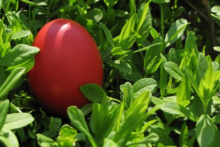 bright red easter egg in green bush Stock Photo - 4681045