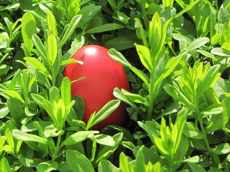 red easter egg on green plant background Stock Photo