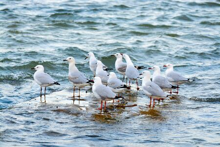 noise isolation: Seagulls on a patch of dry land in the sea Stock Photo