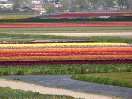 Tulip fields in the distance in Holland Stock Photo