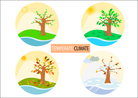 temperate: Four temperate seasons illustration - round buttons  icons