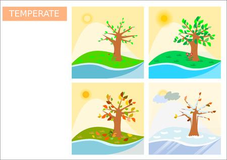 temperate: Four temperate seasons illustration - square format