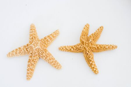 Two natural sea stars on a light background