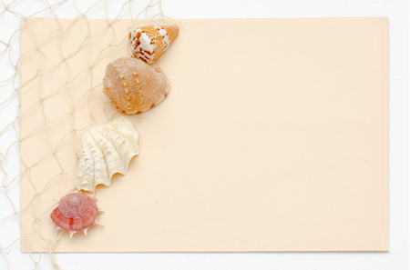 murex shell: Sea shell stationery concept with netting and light peach background - greeting card