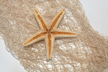 murex shell: Sea star on a netting background - concept of beach stationery or greeting card Stock Photo