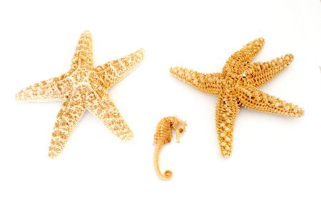 Two sea stars and a tiny sea horse on a white background