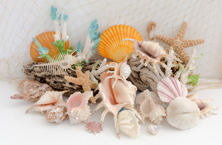 murex shell: Arrangement of natural sea shells and coral on a light background