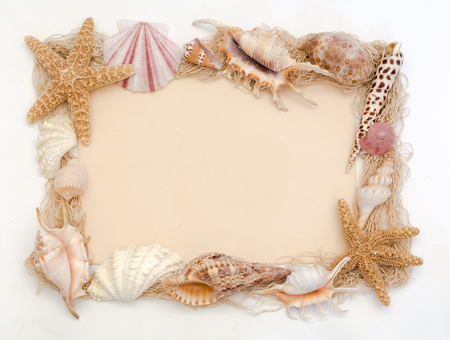 murex shell: Beige colored paper with shell edge - concept of sea side wedding invitation or greeting card