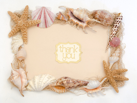 Beach shells thank you card stationery greeting