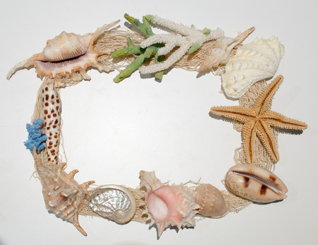 Various shells and coral arranged as a border for text