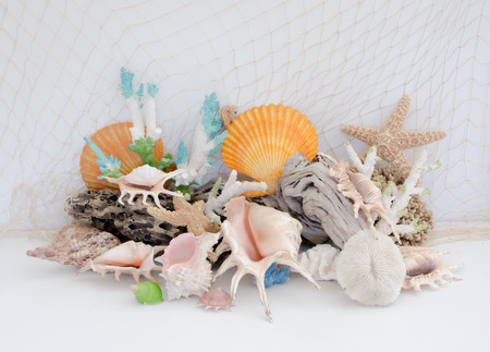Arrangement of natural sea shells and coral on a light background