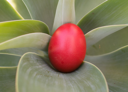 one red easter egg on green background