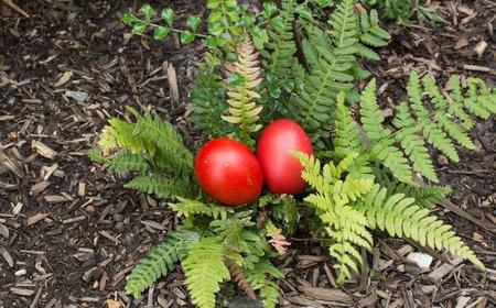 religious habit: Red Easter Eggs hiding in a garden - Easter Egg hunt concept