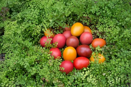 Red and orange Easter eggs in a green nest - hiding in foliage