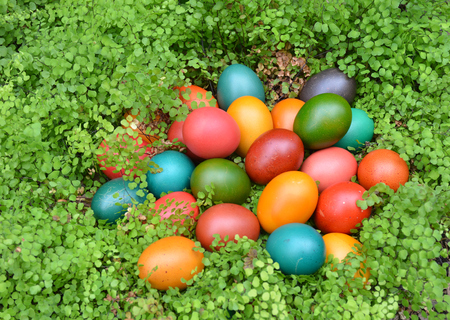 Colourful Easter eggs in a green nest - hiding in foliage
