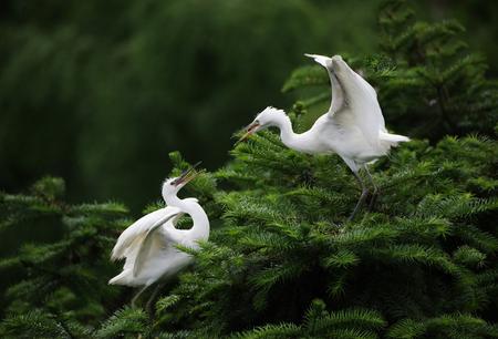 egret: wild egret Stock Photo