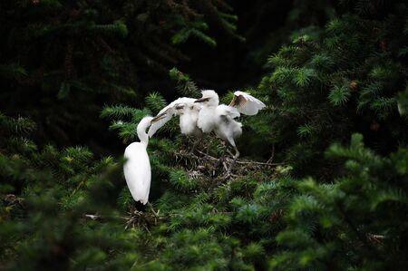 egret: Wild egret