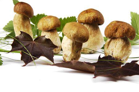 mycelium: Mushroom Stock Photo