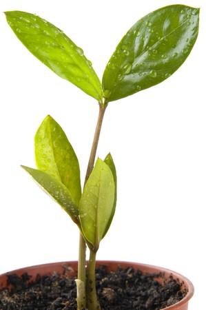 plantlife: plant