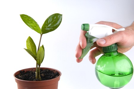 Water your own tree photo