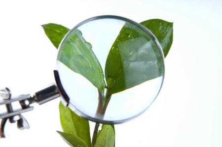 Magnifying plant photo